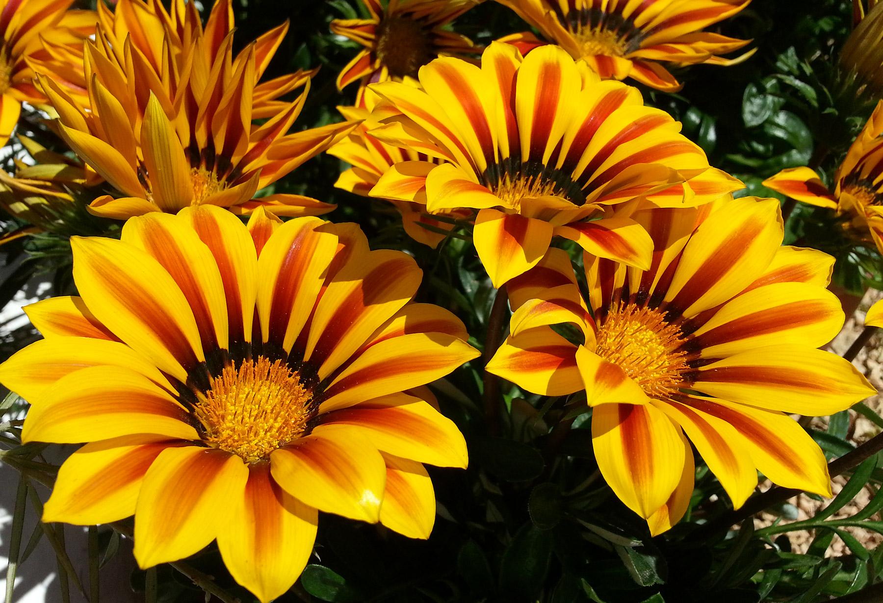 Flowers in the garden of Casita DeLuca