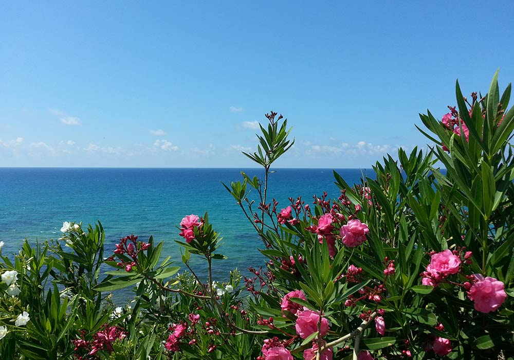 Flowers on the coast of Trappeto