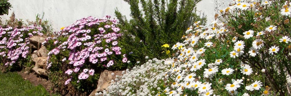 In the garden of Casita DeLuca