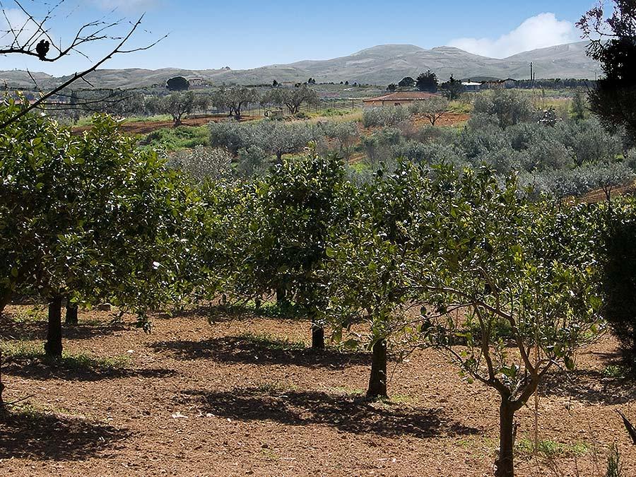 The area near the baglio